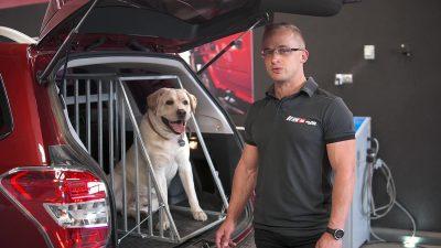 Transport psa i kota