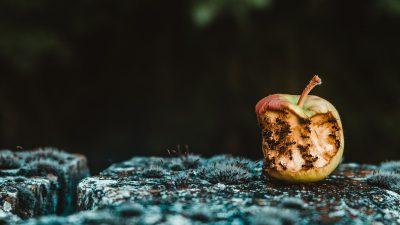 Marnotrawstwo żywności to domena konsumpcji, a nie łańcucha dostaw