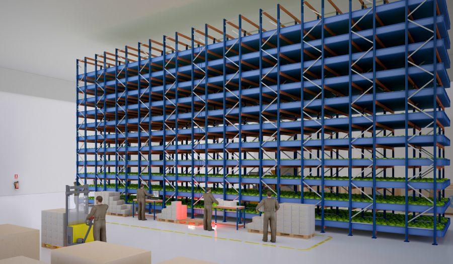 Plantlab rozpoczyna produkcję sałaty rzymskiej i jesiotra w magazynie Hillwood w Kutnie